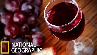 """Взгляд изнутри """"Битва вин"""" Документальные фильмы National Geographic HD"""