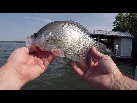 Panfish Assassin  For Crappie