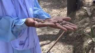 Organic Fertilizers from Earthworms & Organic Grapes 29 May 2013 Bahawalpur Pakistan
