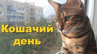 О чём думают коты ⚽️ 🌧 😻