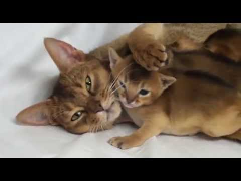 Kitten Mother Love