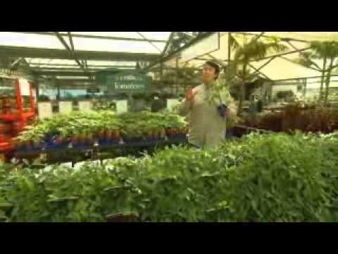 The Garden Gurus - The Greenery Garden Centre