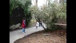 The wild world of Bronx Zoo