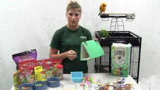 How to Set Up a Parrot Cage - Choosing the right toys for your Parrot