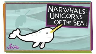 Narwhals: Unicorns of the Sea!