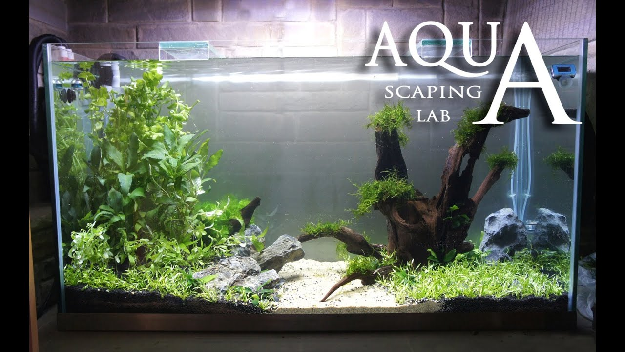 Aquascaping Lab   Tutorial Minimal And Natural Rich Mix Tank (size 110 X 45  X 60h 300 L)   YouTube