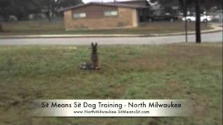 Puppy Training With Sit Means Sit Dog Training - North Milwaukee