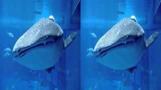 Sony Aquarium 3D SBS