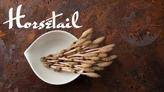 Horsetail Tsukudani Recipe Japanese Cooking | ASMR cooking channel