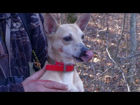 Squirrel Hunting With Steve And Ellie May - The Amazing Mountain Feist