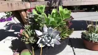 Tender Succulents: Part 7 - Mixed Succulent Bowls & Planters