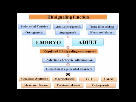 BIOESSAYS (Wiley-Blackwell): Hedgehog signaling as an antagonist of ageing...