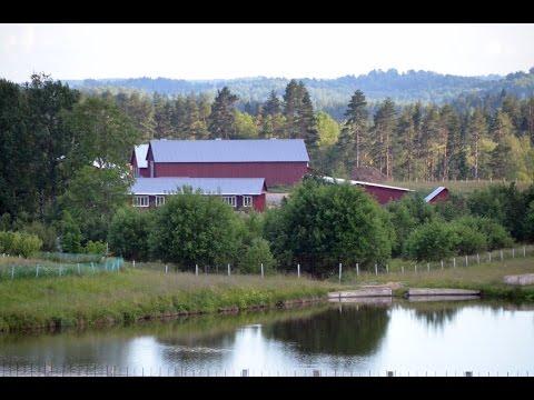 овец ферма фото