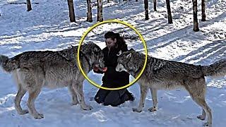УДИВИТЕЛЬНО Волки помогли принять роды у беременной женщины во время бури
