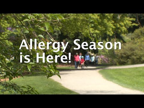 As trees produce pollen, allergies bloom