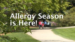 As trees produce pollen, allergies bloom