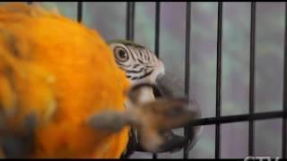 Птицы яркие и сообразительные: более 40 видов попугаев представлены в музее природы и экологии