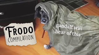 The ULTIMATE Frodo (aka my dog, lol) Compilation