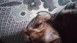 Кот спит не хочет вставать)))