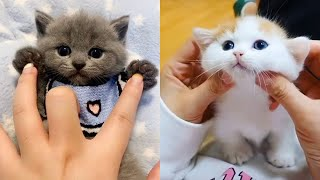Baby Cats - Cute and Funny Cat Videos Compilation | Cute Kittens In The World