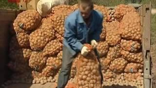 видео В Новгородской области реализуют три программы АПК