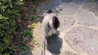 산책하는 강아지 초코환…