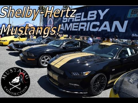 7dff63fb2 A trio of Shelby Hertz Mustangs 2016, 2006 & 1966 Shelby GT350 Hertz Gary  Patterson