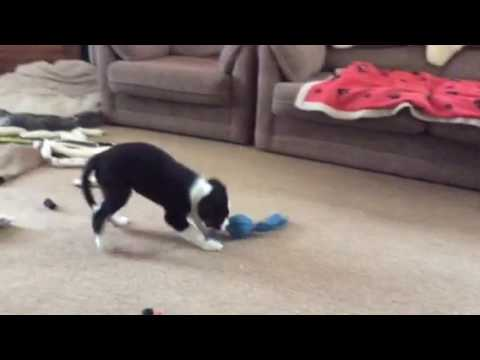 Credit male loving his toys !!