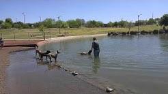Cosmo Dog Park in Gilbert, AZ