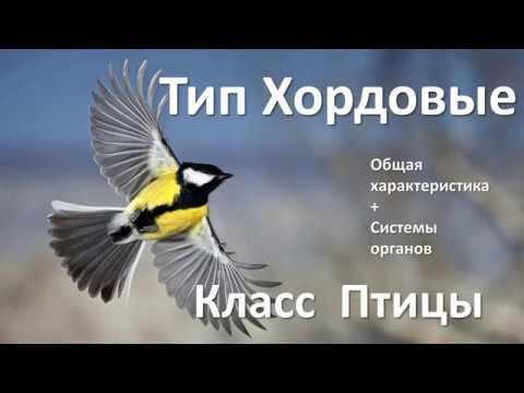 14.1 Птицы часть I (7 класс) биология, подготовка к ЕГЭ и ОГЭ 2019