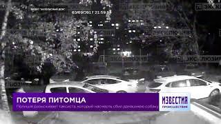 Видео: Таксист сбил домашнюю собаку и скрылся
