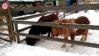 Поездка в Велес 23.02.19 (центр реабилитации диких животных)