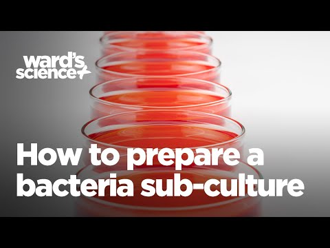 How to Prepare a Bacteria Sub-Culture
