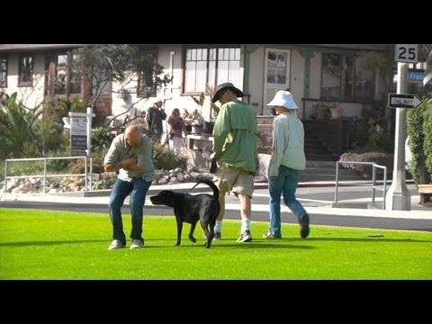 0 Peidando em cachorros...