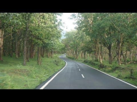 Timelapse: Bandipur Tiger Reserve Forest [India]