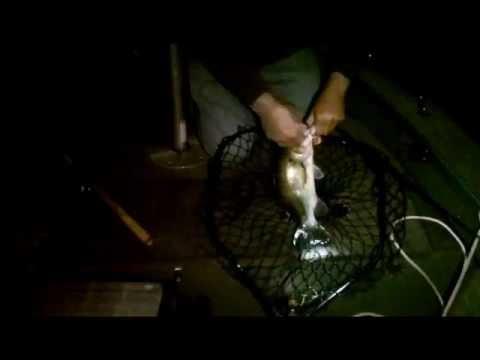 Big fish bite at night
