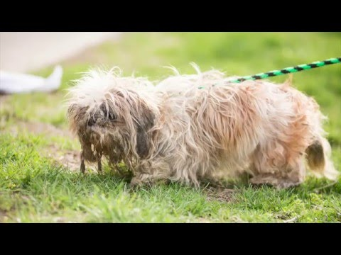 Shelter Dog's Heartwarming Transformation