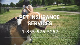 Pet Insurance Austerlitz NY - Affordable Dog Insurance For Cats