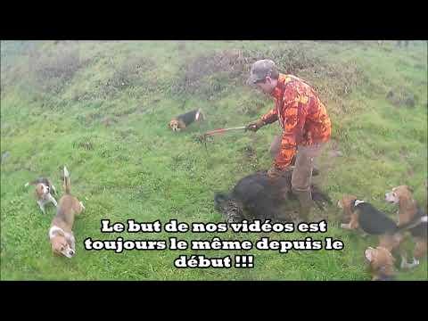chasse-aux-sangliers-au-cœur-de-l'action-!!!-hunter-boar-!!!