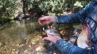 Sweetwater Jungle Perch Cooktown