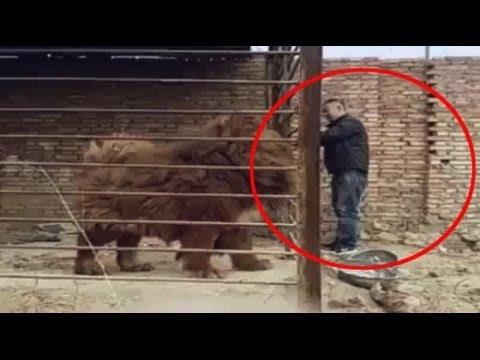 كلب الحراسه الاقوي في الصين والأغلي عالميا تعرف عليه الان ....