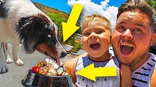 CHOCOLATE ICE CREAM SUNDAE FOR PUPPY DOGS!