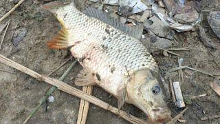 РЫБАЛКА НА САЗАНА И КРУПНОГО КАРАСЯ В ОКТЯБРЕ Рыбалка на реке МЁРТВЫЙ ДОНЕЦ