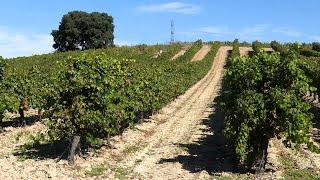Cuatro rutas del vino en Valladolid con un objetivo común