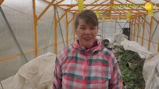 Ускорение урожая: посев на рассаду редиса, салата, капусты