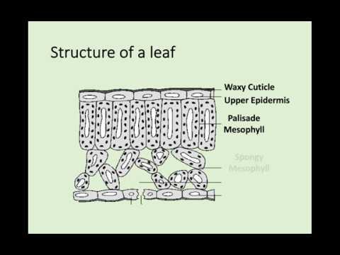 N5 Biology - 2.5 Transport In Plants