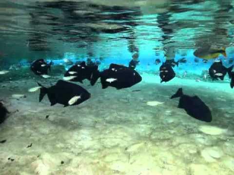 Brasil underwater ,Rio da Prata,Bonito.m4v
