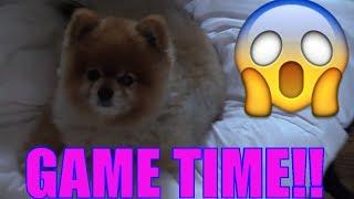 One of Funkee Bunch's most viewed videos: DOG POOP PRANK WET HEAD CHALLENGE, FAMILY FUN! Eww, Doodie Juice? (FUNkee Bunch GameS)