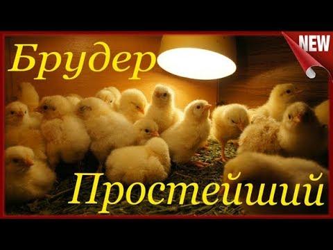 Брудер своими руками для выращивания цыплят видео