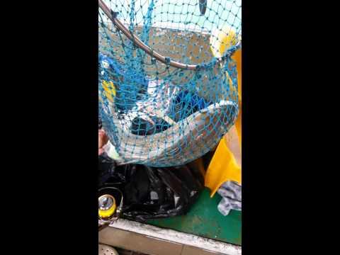 ERA Vector Division Offshore Fishing #1